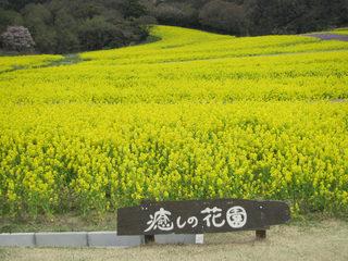 hanasajiki2014_2.jpg