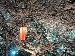 sahogawa2012.jpg
