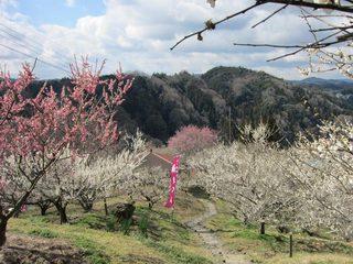 tsukigase1.jpg